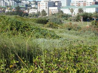 coastal dune revegetation